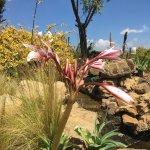 Foto de Qwantani Berg and Bush Resort