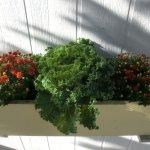 die liebevoll gefüllten Blumenkästchen unseres Bungalows