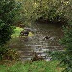 Foto de Grizzly Bear Lodge & Safari