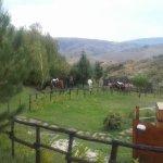 sosta di cavalli lungo il percorso della dorsale dei nebrodi  con assistenza a