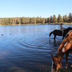 Where guests and horses cool off.
