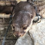 Otter desparate to escape his tiny cage