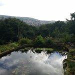 Cwmbach cottages garden