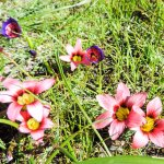 Tienie Versfeld Wildflower Reserve