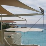 Pelican sitting on the sails above the restaurant.