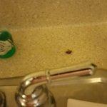Roach & half-empty bottle of dishwashing liquid