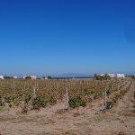 vineyards nearby