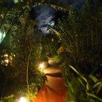 Chemin du jardin / garden path / camino del jardin