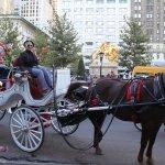 Central Park Horses Picture