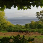 Blick von unserer Terrasse auf den See