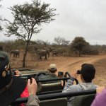 Our vehicle approaches the elephant herd