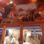 Banff Park Museum