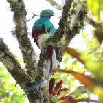 Resplendent quetzal seen on the Quetzal's Paradise day trip