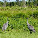 Foto de The Disney Wilderness Preserve