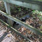 Babbling brook under walking bridge