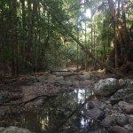 Crystal Creek Rainforest Retreat