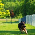 Beaufiful Joe's Off-Leash Dog Park