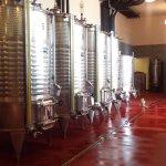 Tenuta Casteani winery
