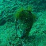 Sea Spirit Diving Resort Foto