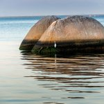Foto de Ilha de Paqueta