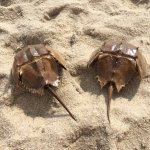 Lewes Beach Photo