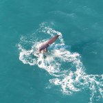 Foto de Wings Over Whales