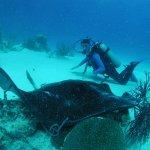 Foto de Caicos Adventures