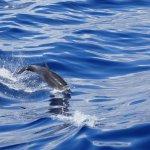 Flipper Uno Foto