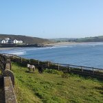 View from front of hotel over Inchydoney Beach - incl the mini shetlands!