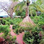 Foto de Island Beachcomber Hotel