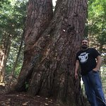 Had an amazing weekend here on our fifth anniversary. It's so sad these trees are endangered.