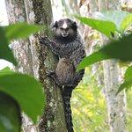 Pousada Colibri Foto