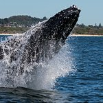 Coolangatta Whale Watch Photo