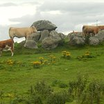 A fence was down and cows had wandered next to one of the stone sites the late afternoon we visi