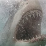 Great White Shark Tours Foto