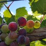 Take a walk through the stunning vineyard