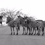 A zebra crossing - of course!
