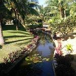 Pandanus Resort Picture