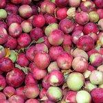 Bishops Orchard