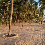 Sandy coconut grove between beach and greens/pool area.