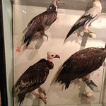 stuffed birds.....