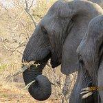 Elephants having breakfast