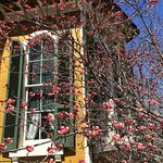 Springtime blossoms near one of Hillforest's bay windows