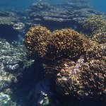 corals at one of snorkeling spots, resurrecting after cyclone