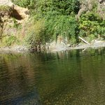 Foto de Cedar Grove RV Park & Campground