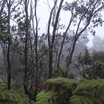 View of the ohia and fern forest from our room on a foggy morning.