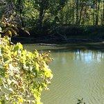 Ward's Marsh Wildlife Management Area