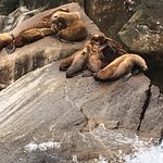 Seal lions resting on the rocks.