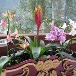 Franka's amazing orchids