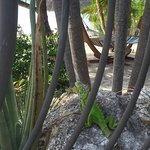 Kona Kai Resort, Gallery & Botanic Garden